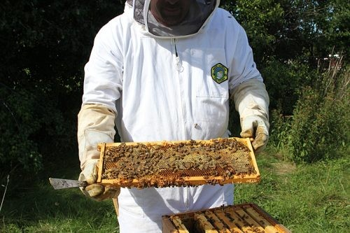 Gear & clothing used when working with bees in the honeycomb