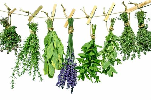 Herb Seminars
