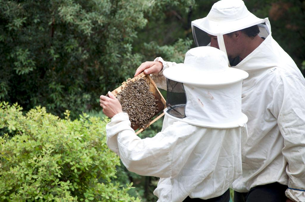 Beekeeping seminars